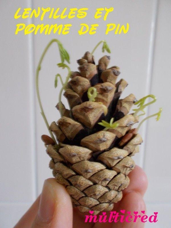 planter une pomme de pin