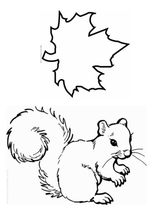 Animaux page 15 - Coloriage d ecureuil ...
