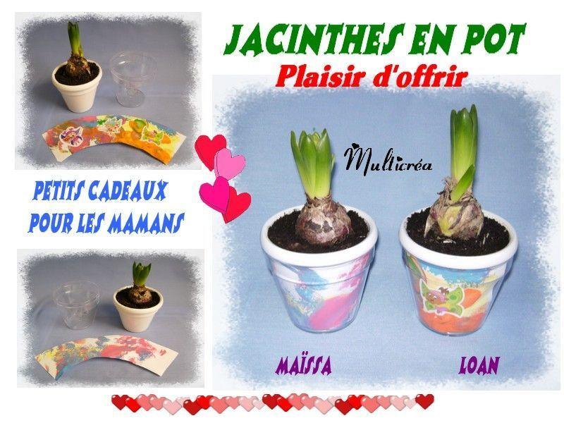 Jacinthes en pot for Vente de fleurs par correspondance